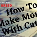 HOW TO MAKE MONEY WITH CATTLE | Selecting A Profitable Cattle Breed For Your Farm